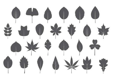A set of greey various Leaves. Vector icon. Vector Illustration. Plant in garden.