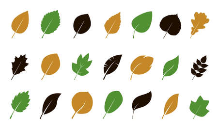 Set of green various Leaves. Vector Illustration. Vector Illustration. Plant in garden.