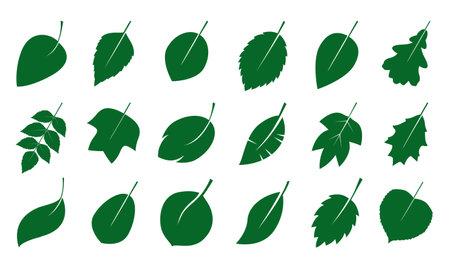 Set of green various Leaves. Vector Illustration. Vector Illustration. Plant in garden.