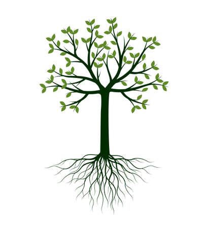 Shape of Tree with leaves and Roots. Vector outline Illustration. Plant in Garden. 矢量图像
