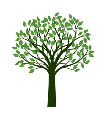 Shape of green Tree with leaves. Vector outline Illustration. Plant in Garden.