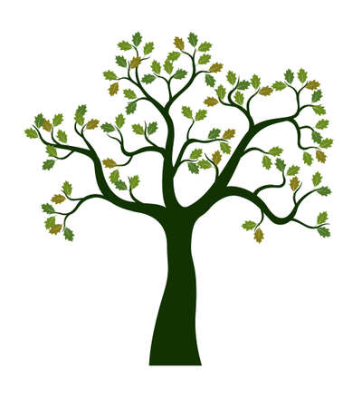 Green Oak Tree with leaves. Vector outline Illustration. Plant in Garden.