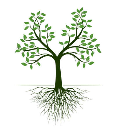 Shape of green Tree with Roots. Vector outline Illustration. Plant in Garden. Vettoriali