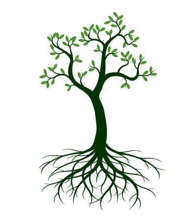 Shape of green Tree with Roots. Vector outline Illustration. Plant in Garden. 向量圖像