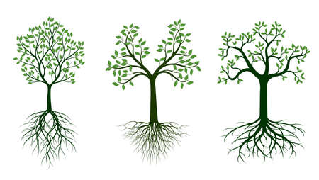 Shape of Tree with green Leaves and Roots. Vector outline Illustration. Plant in Garden.