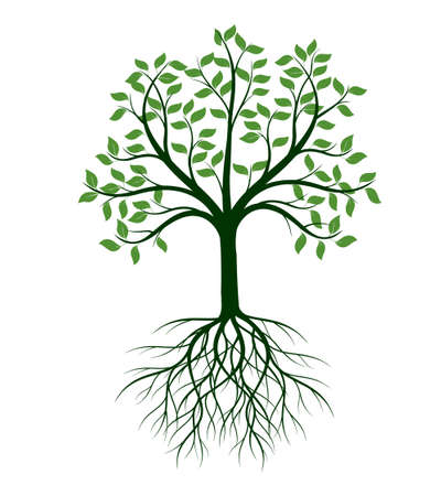 Shape of Tree with leaves and Roots. Vector outline Illustration. Plant in Garden. Vektorové ilustrace