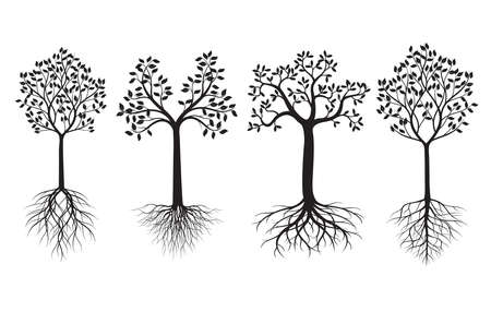 A Set of Trees with Leaves and Roots. Vector outline Illustration. Plant in Garden.