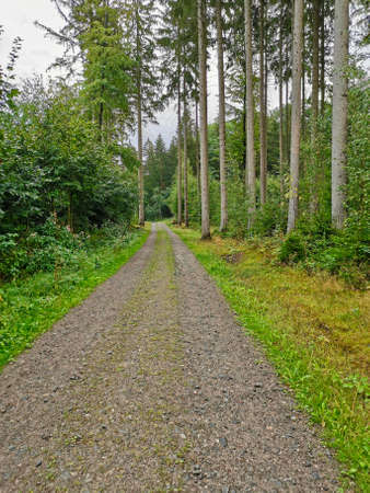 beautiful forest path in the rainy forest Imagens