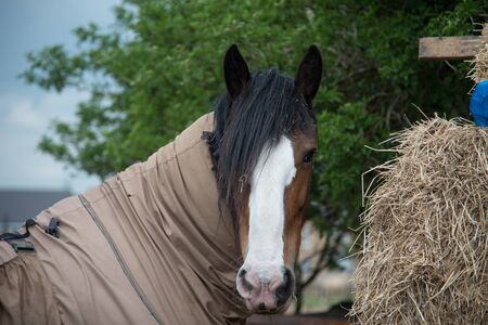 Barn horse with its funky hairstyle Imagens - 57028121
