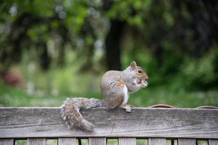 squirrel chewing a nut