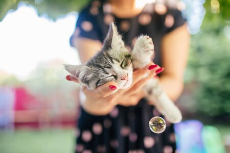 Cute grey and white kitten sleeps on womans hands in a dress and wearing red nails. Outside. Woman holds slipping kitten