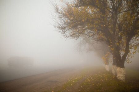 Road in foggy early autumn morning. Tree silhouettes. Horisontal. Copyspace