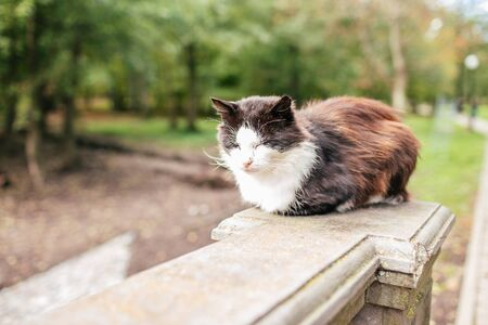 Black and white street cat. Cat wandering, sitting on the sidewalk in a park. The concept of the problem of homeless animals.