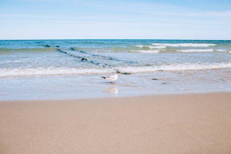 Baltic sea beach landscape with blue sea white sand and seagull. Sunny autumn day