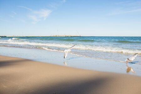 Baltic sea beach landscape with blue sea white sand and seagull. Sunny autumn day. 写真素材