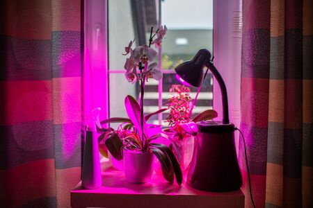 LED lamp for growing plants for agriculture, Phytolamps. Home plants on the windowsill under the fito lamp