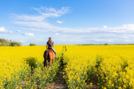 Young woman riding on a brown horse in yellow rape or oilseed field with blue sky on background. Horseback riding. Space for text.