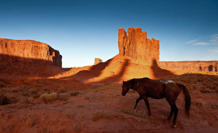 Monument Valley Horse photo