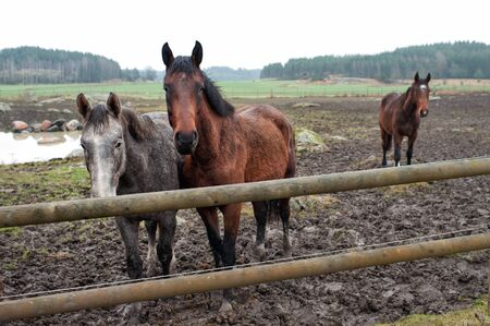 gruesome: Young horses enduring their first November in Sweden