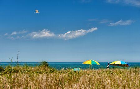 Summer at Martha s Vineyard - Seagull soaring over a beach at Martha s Vineyard on a sunny day