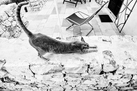 cat stretching: Italian cat stretching on a limestone wall in Alberobello, Puglia Stock Photo