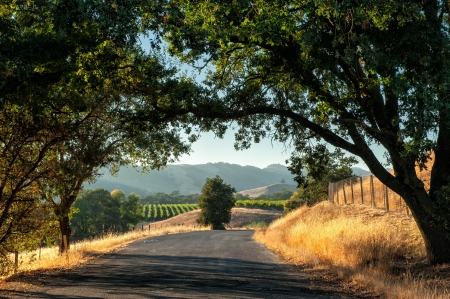 wine road: Road trip through Sonoma wine country at harvest time  Stock Photo