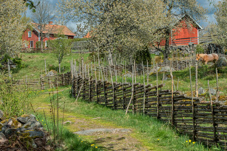 Springtime in Sweden - a sunny day in the countryside of Smaland in early May photo