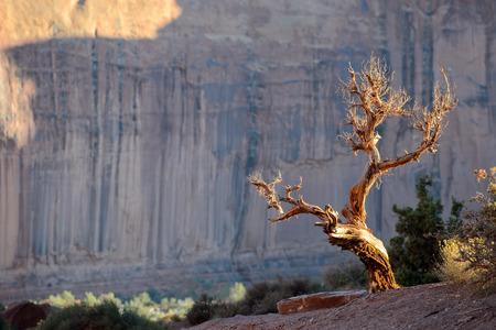 tree dead: Albero morto in Monument Valley Archivio Fotografico