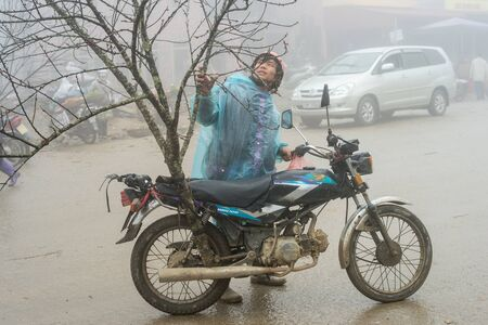 goat peach: Sapa, Vietnam - February 13, 2015: Vietnamese man transports a peach tree on a motorbike on a foggy and rainy day. Vietnamese people traditionally decorate their homes for the Chinese New Year with a peach tree or a citrus fruit tree.