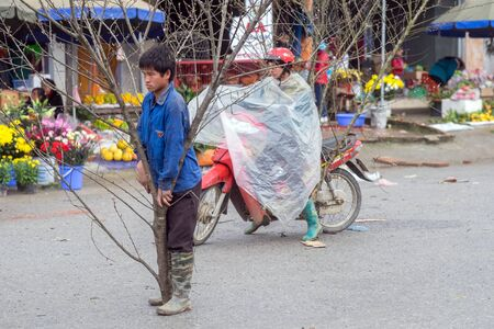 goat peach: Sapa, Vietnam - February 14, 2015: Vietnamese boy with a peach tree on a rainy day at a market in Sapa. Vietnamese people traditionally decorate their homes for the Chinese New Year with a peach tree or a citrus fruit tree.