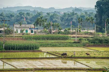 exporter: Lao Cai, Vietnam - February 12, 2015: Rice fields on a misty day in the countryside on outside Lao Cai. Vietnam is the second largest exporter of rice worldwide.