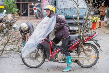 Sapa, Vietnam - February 13, 2015: Vietnamese man transports a peach tree on a motorbike at the market in Sapa. Peach trees are symbols of life and good fortune in Vietnam and hence bought for the Chinese New Year.