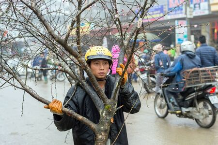 peach tree: Sapa, Vietnam - February 13, 2015: Vietnamese man carries a peach tree at the market in Sapa. Peach trees are symbols of life and good fortune and hence bought for the Chinese New Year.