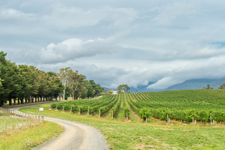 Yarra Valley is one of Australia's premium wine growing regions.