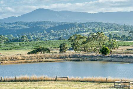 Wijngaarden op FebYarra Valley is een van Australias premium wijnbouwgebieden. Stockfoto