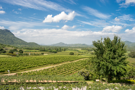 hua hin: Hua Hin Hills vineyards outside Hua Hin in Thailand. The quality of wines is improving in Thailand and the best wines are made from chenin blanc, colombard and shiraz. Stock Photo