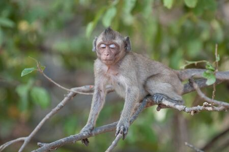 Young macaque monkey in the jungle of Sam Roi Yot National Park south of Hua Hin in Thailand