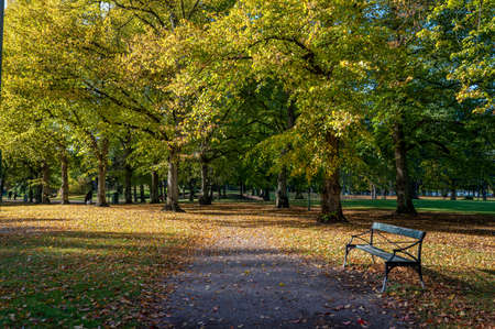 A sunny autumn day in city park Folkparken in Norrkoping, Sweden in mid October 2020 版權商用圖片