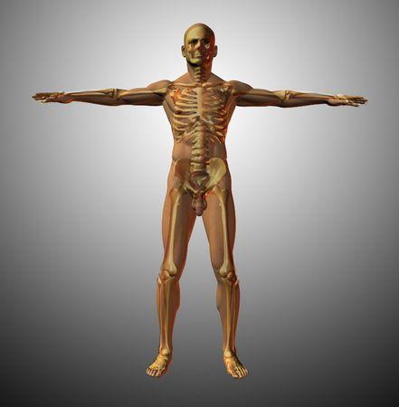 anatomically: Skeleton and male figure superimposed Stock Photo