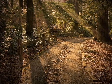 Path lit by golden beams of sunlight