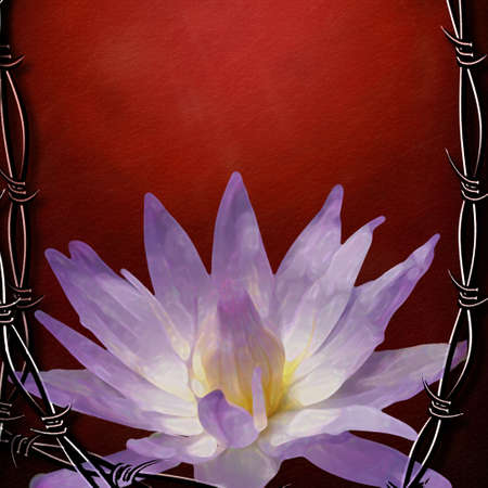 vulnerable: Contrast of Hard and sharp Barbed wire and soft and vulnerable lotus flower
