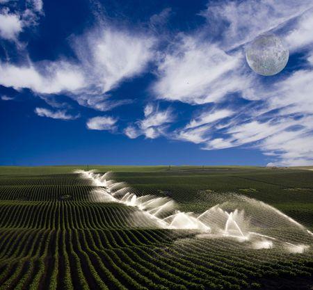 Irrigation on farm Stock Photo - 3604237