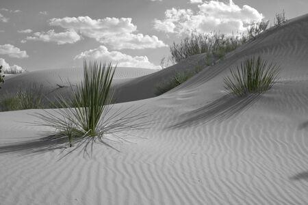 colorized: Colorized Desert