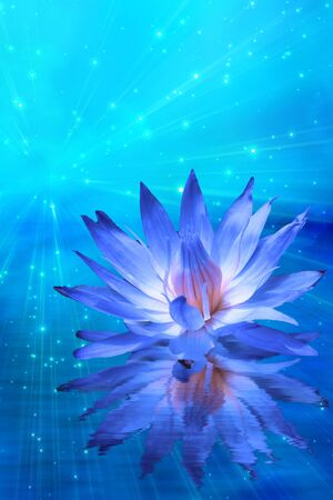 exotic flower: Lotus and light with stars