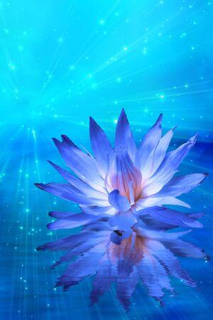 flores exoticas: Lotus y la luz de estrellas Foto de archivo