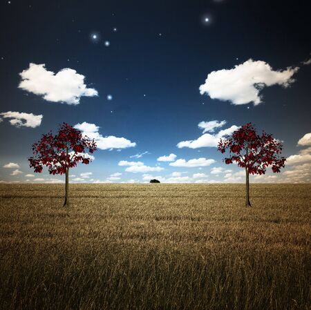 Field with two trees Stock Photo - 4454794
