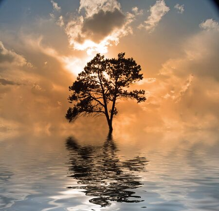 Water and tree sunset photo