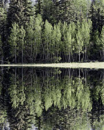 spirtual: Forest Lake