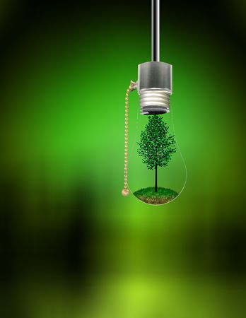 Tree in Hanging Bulb photo