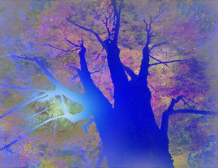 Tree Landscape photo